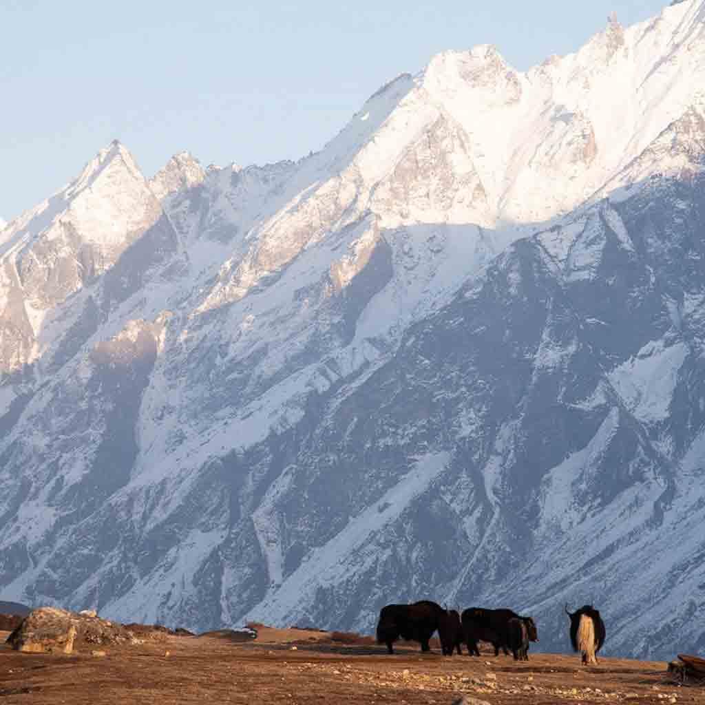 Langtang Alpine Skills | 4000m+